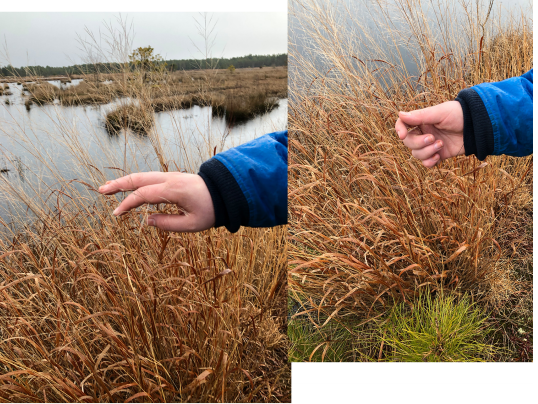 Two images of the author, a white non-binary person, gently touching the brown fronds of a plant by the edge of a bog. The water and sky, both gray, are visible in the background.