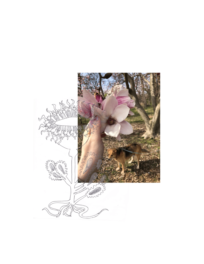 A photo of the author, a white non-binary person, grasping a pink flower dangling from a tree. A dog can be seen in the background. A sketch of a flower is superimposed atop the photo.